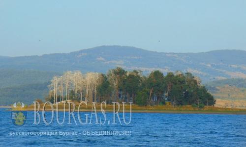 5 августа 2016 года, Болгария, Смолян, жук-короед уничтожает леса в Восточных Родопах
