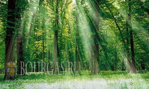 болгарские леса, леса Болгарии