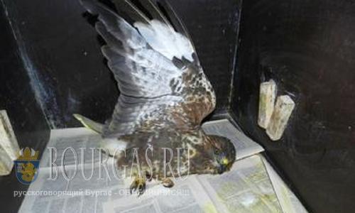 Браконьеры в Бургасе убивают редко встречающиеся виды птиц