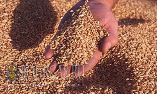 Цены на пшеницу в Болгарии падают