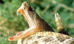 Первая жертва от укуса змеи в Южном Причерноморье Болгарии