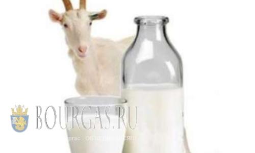 В Болгарии задержали контрабандистов козьего молока