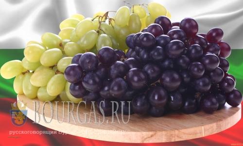 виноград Болгарии, болгарский виноград
