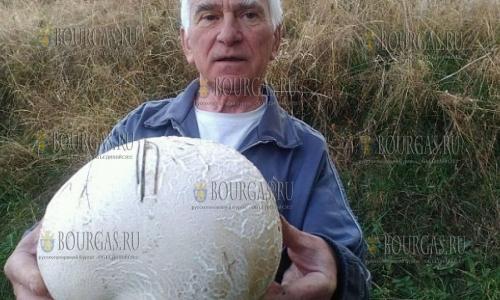 2-х килограмовый гриб-дождевик вырос в Болгарии