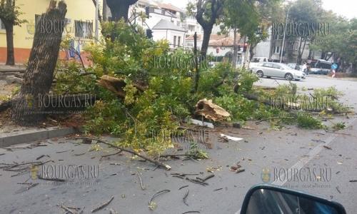 20 сентября 2016, Варна, сильный ветер свалил дерево на пересечнии улицы Ген Колев и бульвара Цар Освободител