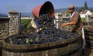 Гроздоберник сбор винограда на Крестовдень