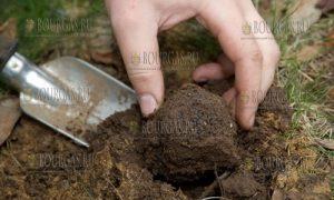 Угырчин в Ловечской области - в поисках трюфелей.jpg
