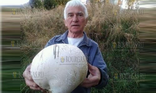 Гигантский гриб-дождевик вырос в Болгарии
