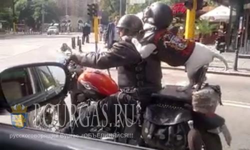 Пес байкер на улицах Софии