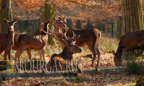 Поголовье диких животных в Болгарии уменьшается