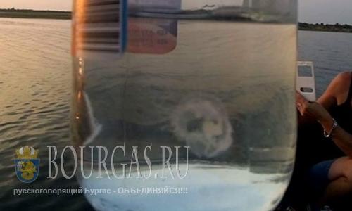 В озере Горни Дъбник в районе Плевена появились медузы