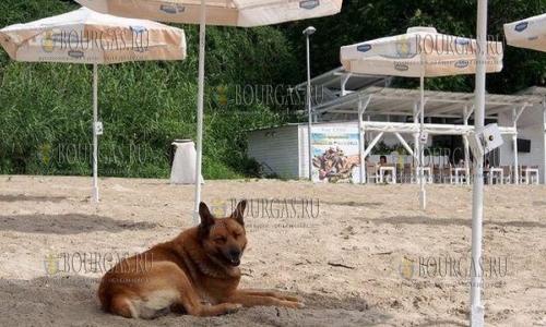 Выгуливать собак на пляжах в Варне станет накладно
