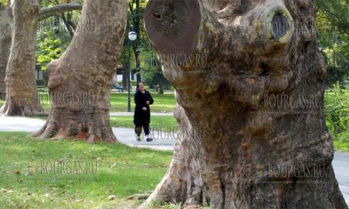 10 октября 2016 года, Пловдив, сад Царя Симеона - платановая аллея