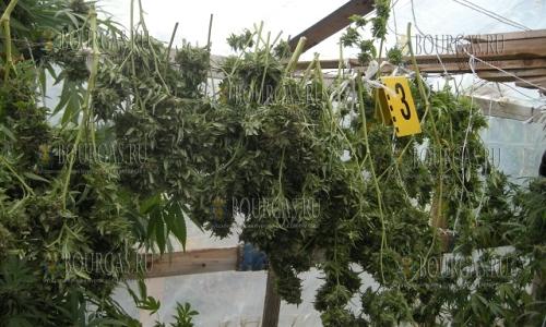 25 октября 2016 года, силистринское село село Айдемир, в центре населенного пункта сотрудники полиции обнаружили наркооранжерею