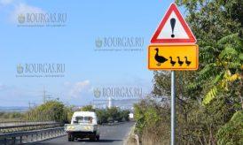 5 октября 2016 года, Бургас, новый дорожный знак - Осторожно птицы с птенцами