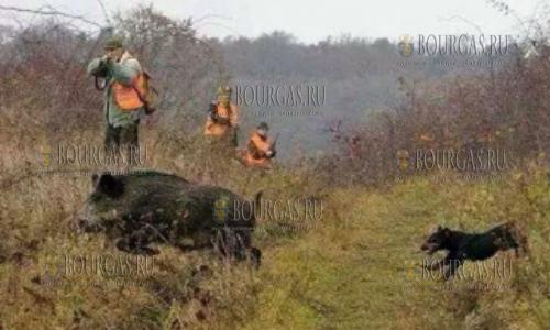 Сезон охоты в Болгарии открыт