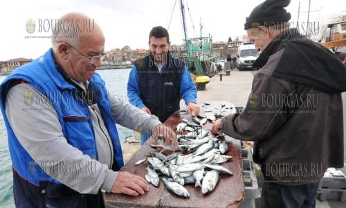 10 ноября 2016 года, в этом году по всему побережью Болгарии отменный улов черноморского луфаря, Святого Николая в Болгарии