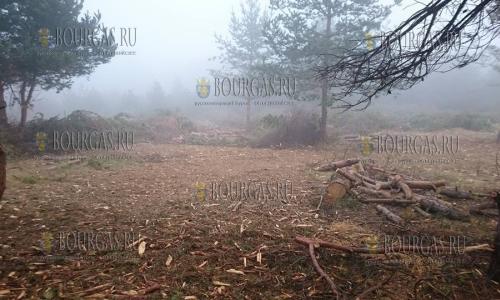 19 ноября 2016 года, в районе Витоши не первый день идет незаконная вырубка леса