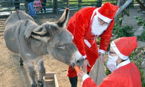 23 декабря, зоопарк в Варне, животных поздравили с Рождеством