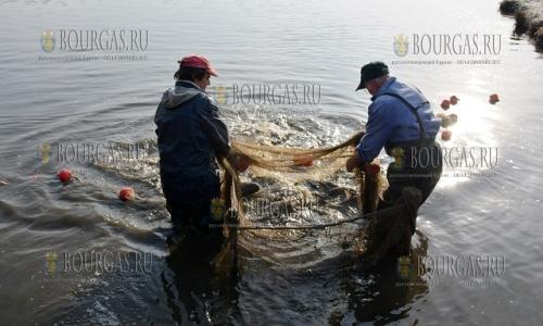 4 декабря, Благоевград, местные рыболовы вылавливают в своих водоемах карпа и толстолобика к Дню Святого Николая