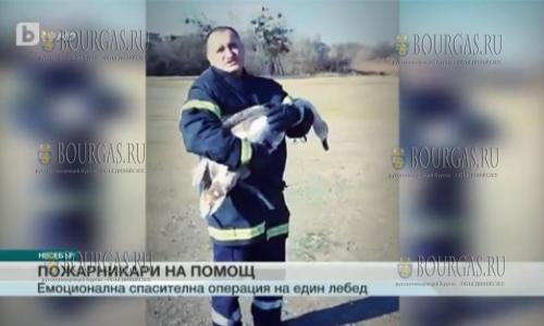 Пожарные из Несебра спасли лебедя