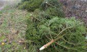Штраф за незаконно срубленную елку в Болгарии до 5 000 лев