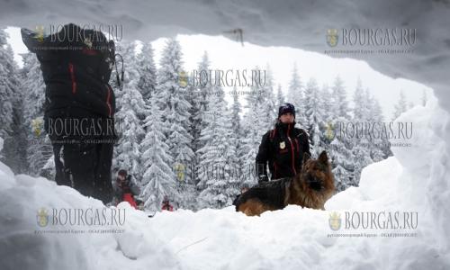 18 января 2017 года, специалиств горно-спасательной службы Болгарии проводят обучение собак