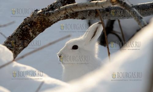 Плодовым деревьям в Болгарии - сейчас зайцы опаснее морозов