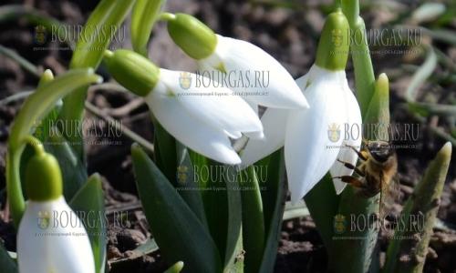 18 февраля 2017 года, в некоторых районах Болгарии уже цветут первые весенние цветы