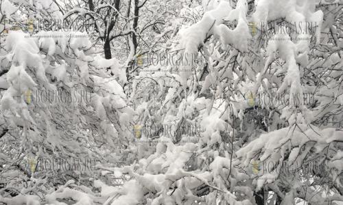 20 февраля 2017 года, София, к утру 20-го февраля в городе выпало около 14 см снега