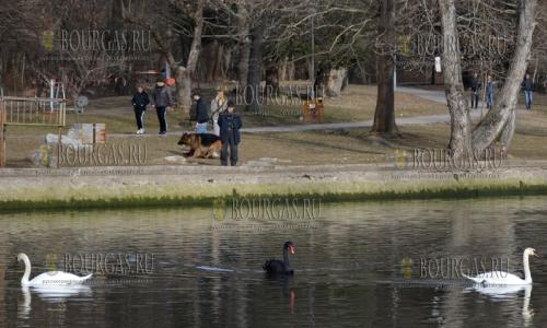 22 февраля 2017 года, Благоевград - природный парк Бачиново, в этот регион Болгарии весна уже точно пришла