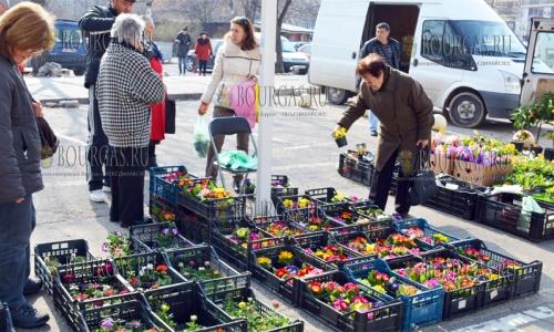 15 марта 2017 года, Благоевград, здесь уже во всю торгуют рассадой