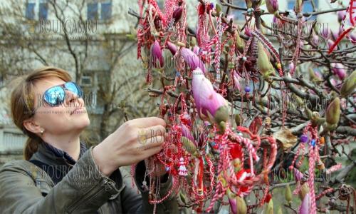 20 марта 2017 года, Велико Тырново, здесь в центре города начинает цвести магнолия и сегодня она обвешена мартицами