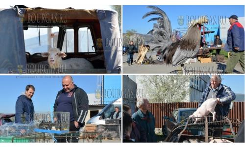 29 марта 2017 года, птичий рынок Благоевграда, перед Пасхой здесь всегда идет бойкая торговля