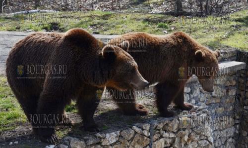 Бурые медведи в зоопарке Добрича вышли из спячки