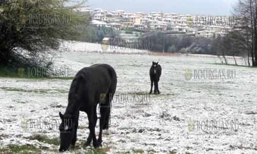 18 апреля 2017 года, селение Кладница, здесь прошел апрельский снегопад