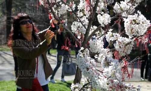2 апреля 2017 года, Южный парк Софии, здесь зацвела настоящая сакура