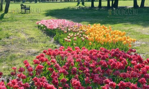 25 апреля 2017 года, Университетский ботанический сад в Варне, здесь зацвели тюльпаны, которых высажено более 70 000 штук