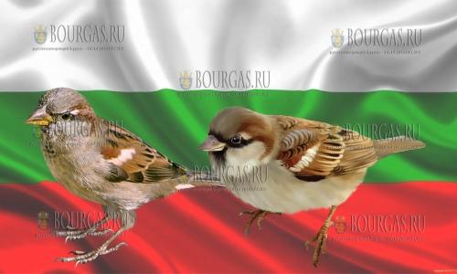 В Болгарии считают воробьев