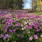 Софийский ботанический сад сегодня бесплатно пускает посетителей