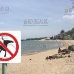 На Южной пляже Несебра запретили выгул собак