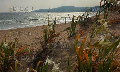 Болгария пляж Аркутино