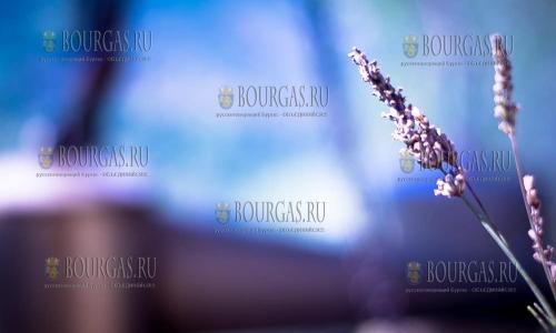 Фестиваль лаванды в Болгарии