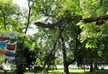 В районе экспо-цента Флора в Бургасе - выпустят орлов-могильник