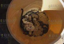 змеи в Софии не редкость, но как в одном из домов в столичном ЖК Хаджи Димитр появилось целая семья змей - пока не ясно