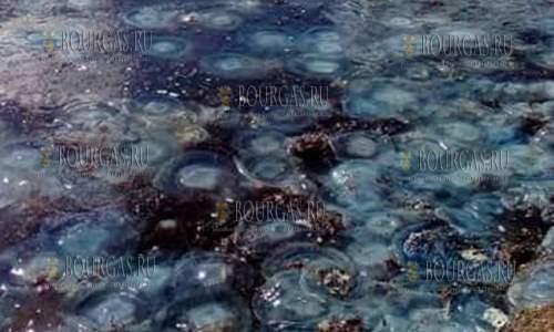 погода в Бургасе в октябре по нраву и многочисленным медузам
