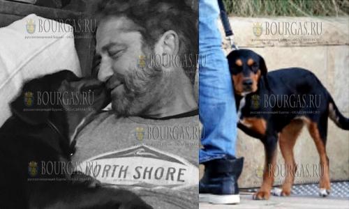 Знаменитый шотландский актер - Джеррард Батлер в Болгарии, во время съемок нашел свою новую любовь - он подобрал бездомную собаку