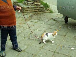 В Бургасе появилась дама с кошкой на поводке