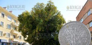 Болгария выпускает в обращение монету 10 лев Старый вяз в Сливене