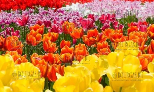 парад тюльпанов в Балчике